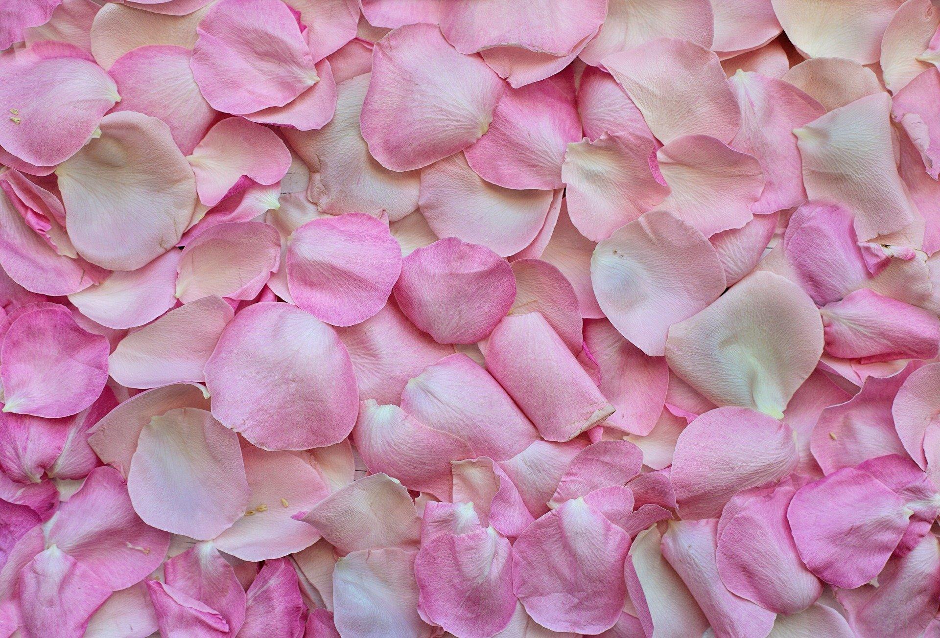 Fiore Ischia
